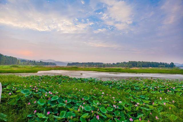 走遍临沂-沂南初秋季节的汶河湿地公园