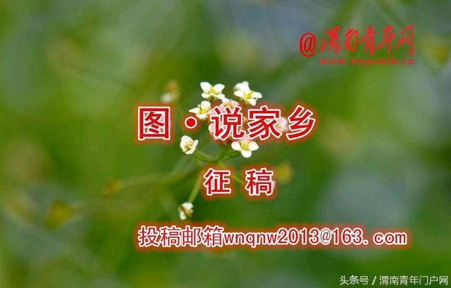 澄城实验学校照片