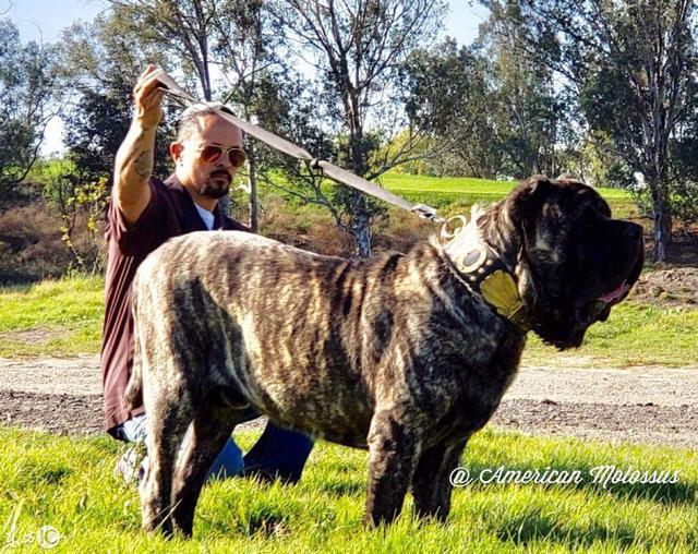 波利犬多少錢一只