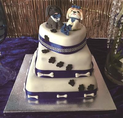 相亲超过220次后,女模特决定嫁给狗,全英国人民通过电视直播见证了婚礼