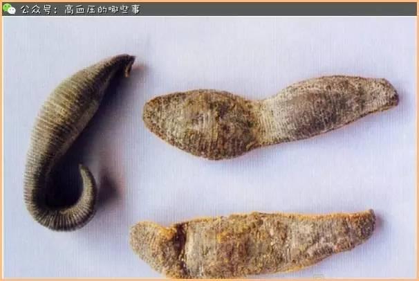 水蛭的功效与作用 可怕的水蛭居然能治病(2) - 中药本草 - 民...