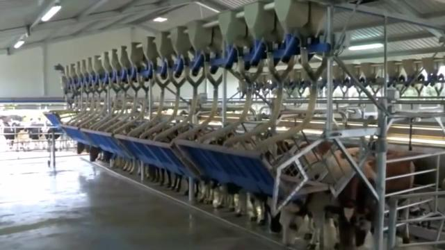 山东济宁供应现代化养牛场 正规养牛场 大型肉牛... - 中国供应商