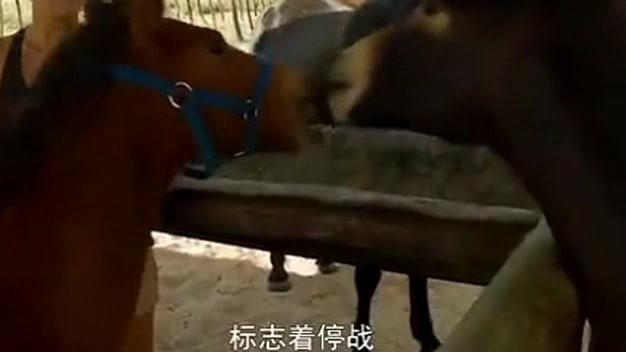 人与动物vlog