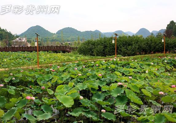 贵阳黔灵山公园图片