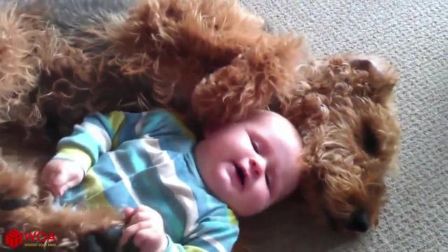 狗狗和小主人玩耍的场面简直太暖心了!