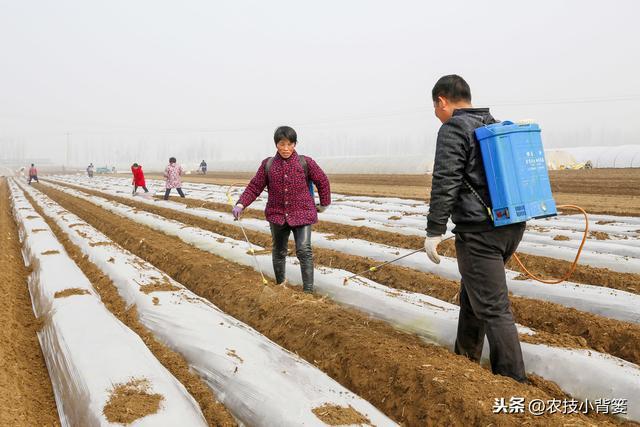 【指南】蟹爪兰的病虫害防治及水培方法 - 养花网