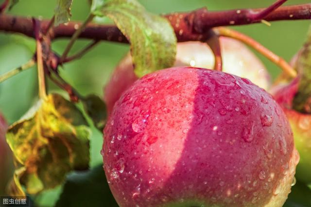 柑橘病虫害物理防治主要有哪些措施?农业防治病虫害有哪些措施?