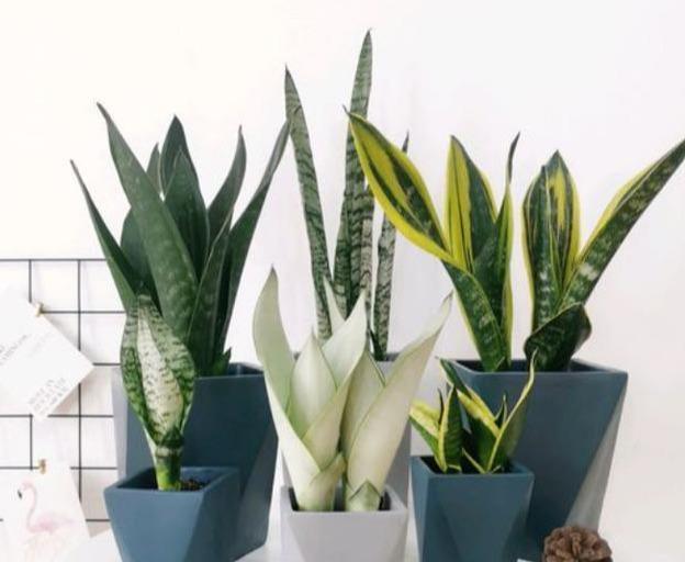 """4种适合室内养的植物,一个月不浇水都没问题,最适合""""懒人""""养"""
