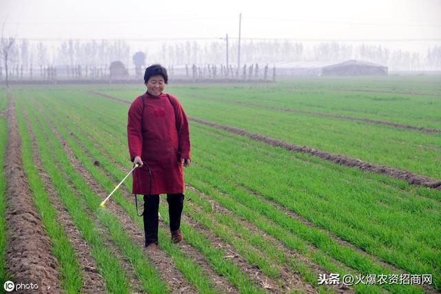 野麦子怎么吃 野麦子的正确食用方法_蔬菜知识_做法,功效与作...