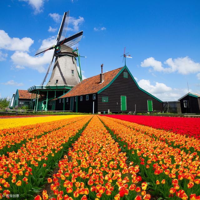 """荷兰农业种植""""不接地气"""",自然环境中生长的农产品何处寻?"""