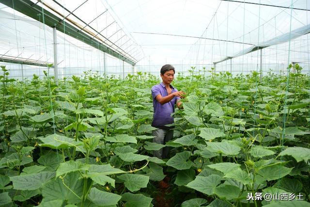 蔬菜大棚挣钱吗,十亩一年能挣多少钱?
