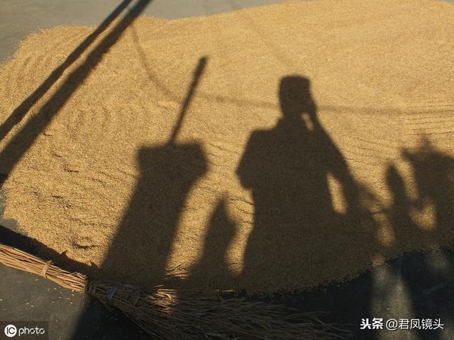 稻谷图片_59张 (天堂图片网)