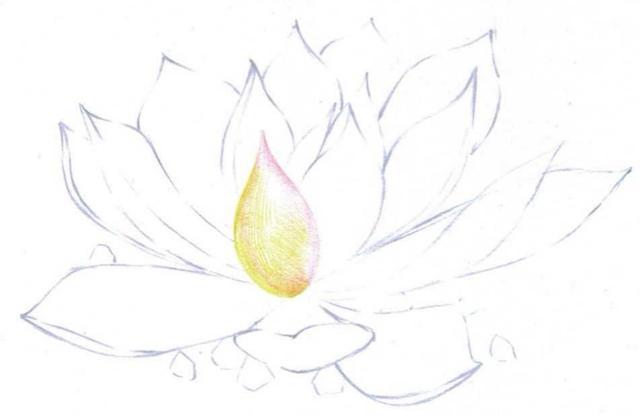 美丽的多肉植物彩铅手绘画图片大全 - 5068儿童网