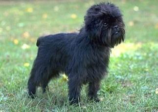小型犬宠物狗品种