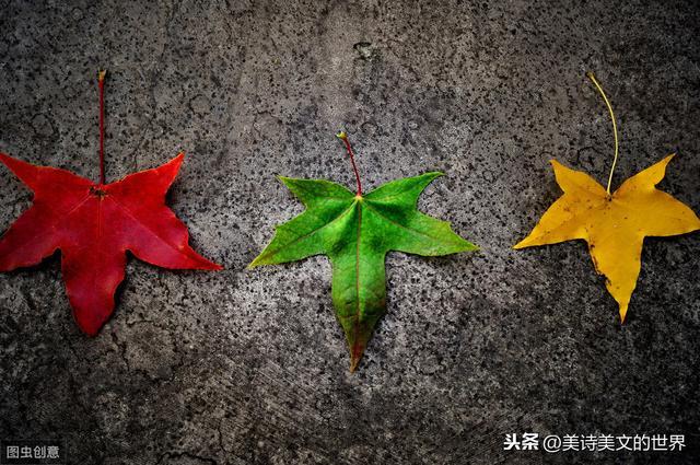 余秀华,那个身残意坚、爆红的农妇诗人:穿越大半个中国去睡你!