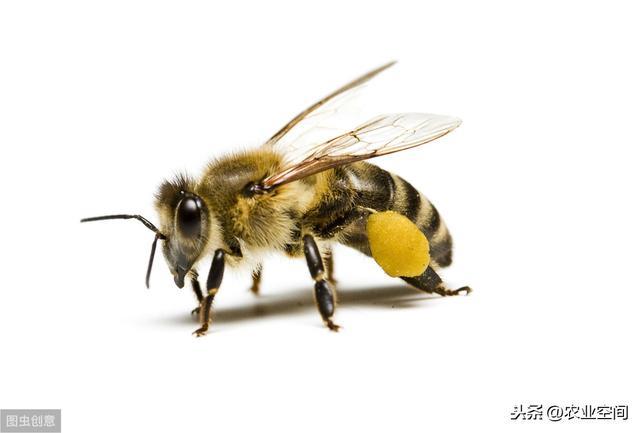 小蜜蜂卡通图片