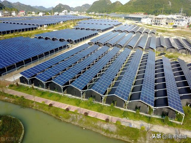 广东茂名大型复合光伏项目,投资6.2亿元,采用发电和种植模式