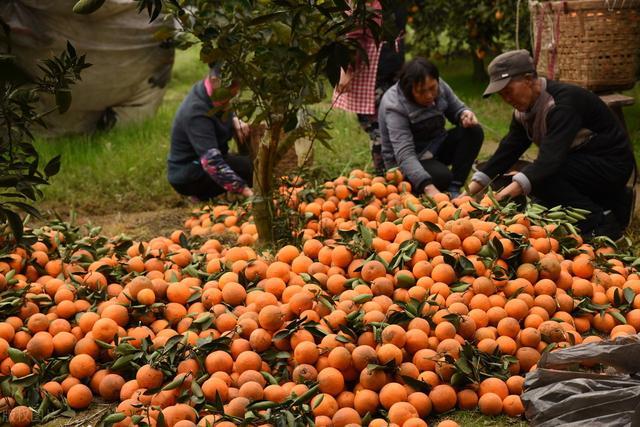 中国恢复与越南合作,5月为其创收1亿美元,越南人民:感谢中国