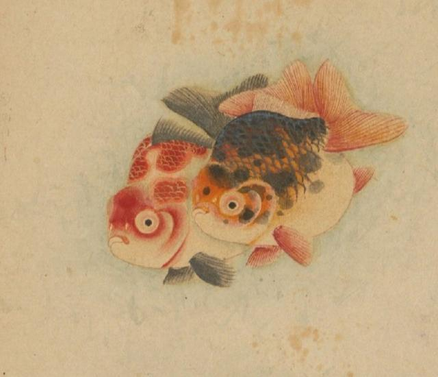 写意金鱼的画法