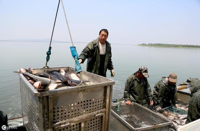 500斤大青鱼图片