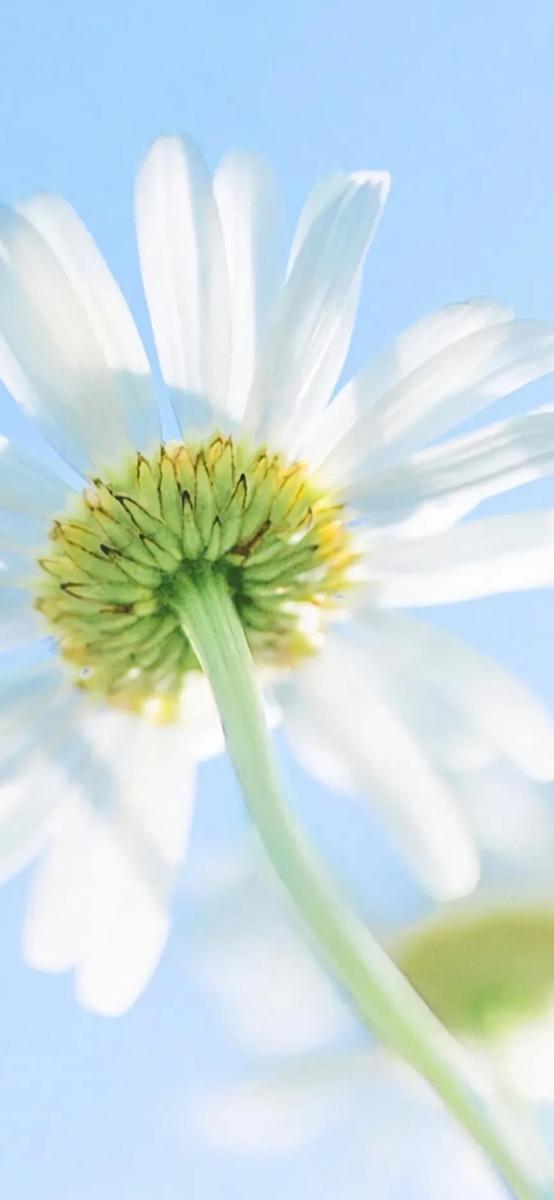 各种花朵图片