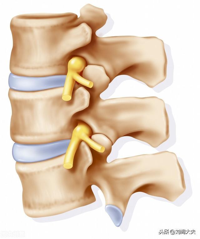 腰椎痛图片