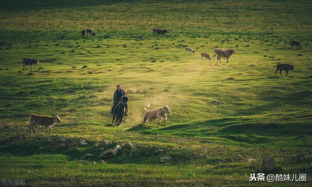 7月暑假,去草原正好 3天中国最美草原自驾达达线详攻略