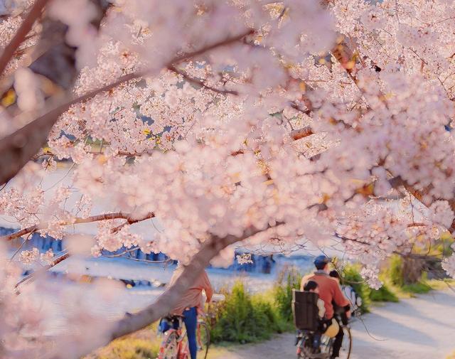 壁纸手机高清唯美花朵