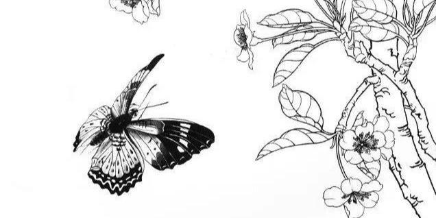 花卉国画工笔线描