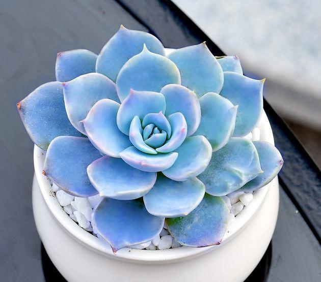 各种盆栽花卉名称及图片欣赏大全_齐家网