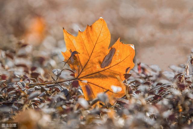8首秋天的诗词,意境悠长,句句醉人心