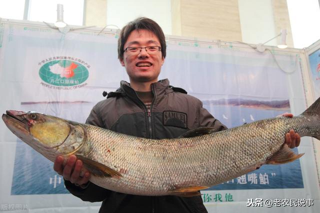 铜头鱼多少钱一斤