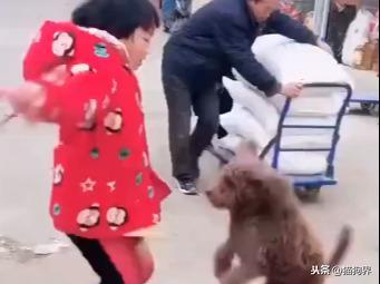 狗狗陪着小主人玩跳绳,看这小家伙跳的多带劲,连大妈都看呆了