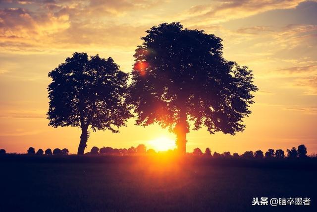 面朝阳光,努力生长,保持本色,不卑不亢