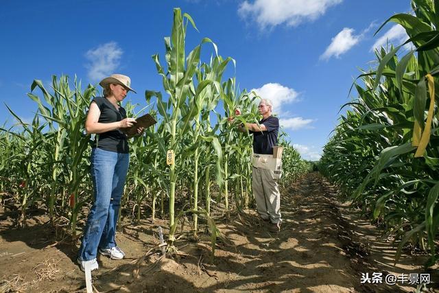 65、11、4、2,今年新过审的玉米、水稻、大豆、棉花,来头不小