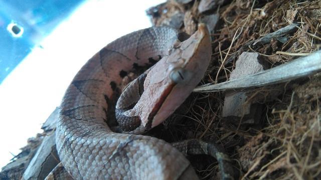 泉州2米大蛇吓坏老人