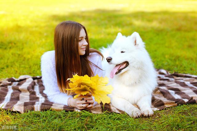 最新民调显示:这十种狗又便宜又好养