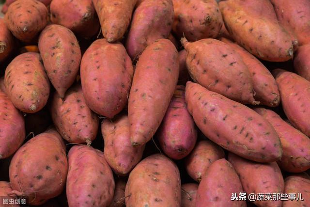 河南红薯 - 红薯网