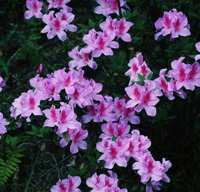 各种花朵头像大全