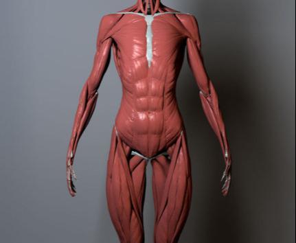 女性下半身身体构造