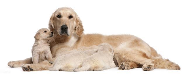 养狗狗最容易忽视的十种疾病,不妨看看