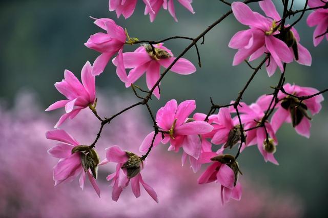 100种常见鲜花的花语,你get了吗?果断收藏