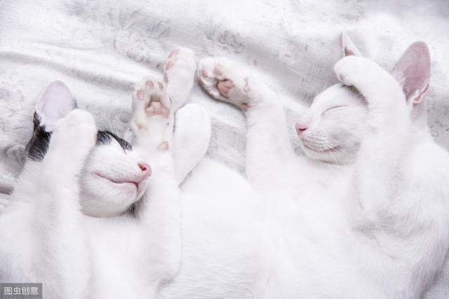 猫用头蹭你代表着什么-第1张图片-IT新视野