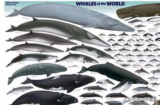 海象和海豹海狮