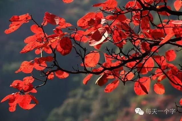 阳,重阳的阳   汉字之美