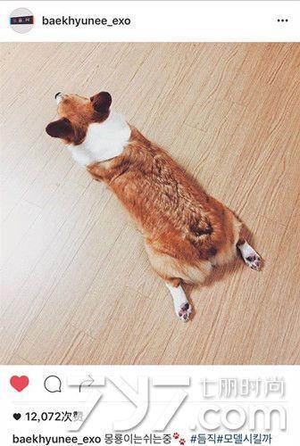 狗狗情侣头像