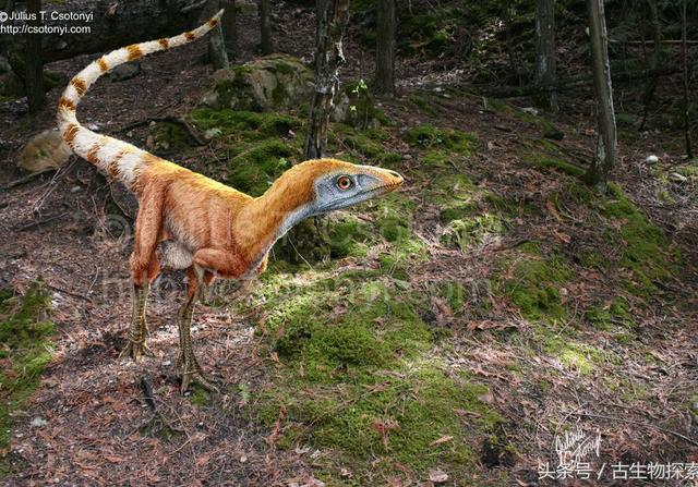 盘点:中国10大最著名恐龙(图)_品略