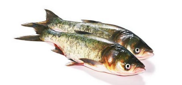 白鲢鱼100斤以上图片