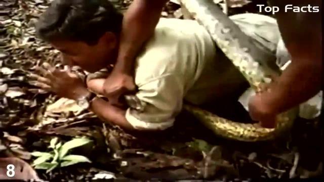 全球蟒蛇吃人事件,太恐怖了