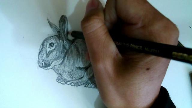卡通小白兔的画法 兔子简笔画图片大全素描_巧巧简笔画